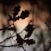 donker blad