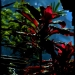 flora at Bali